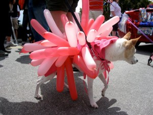 Volunteer Jill Morris's dog Jukebox was the hit of the parade as a Hopkins rose nudibranch.